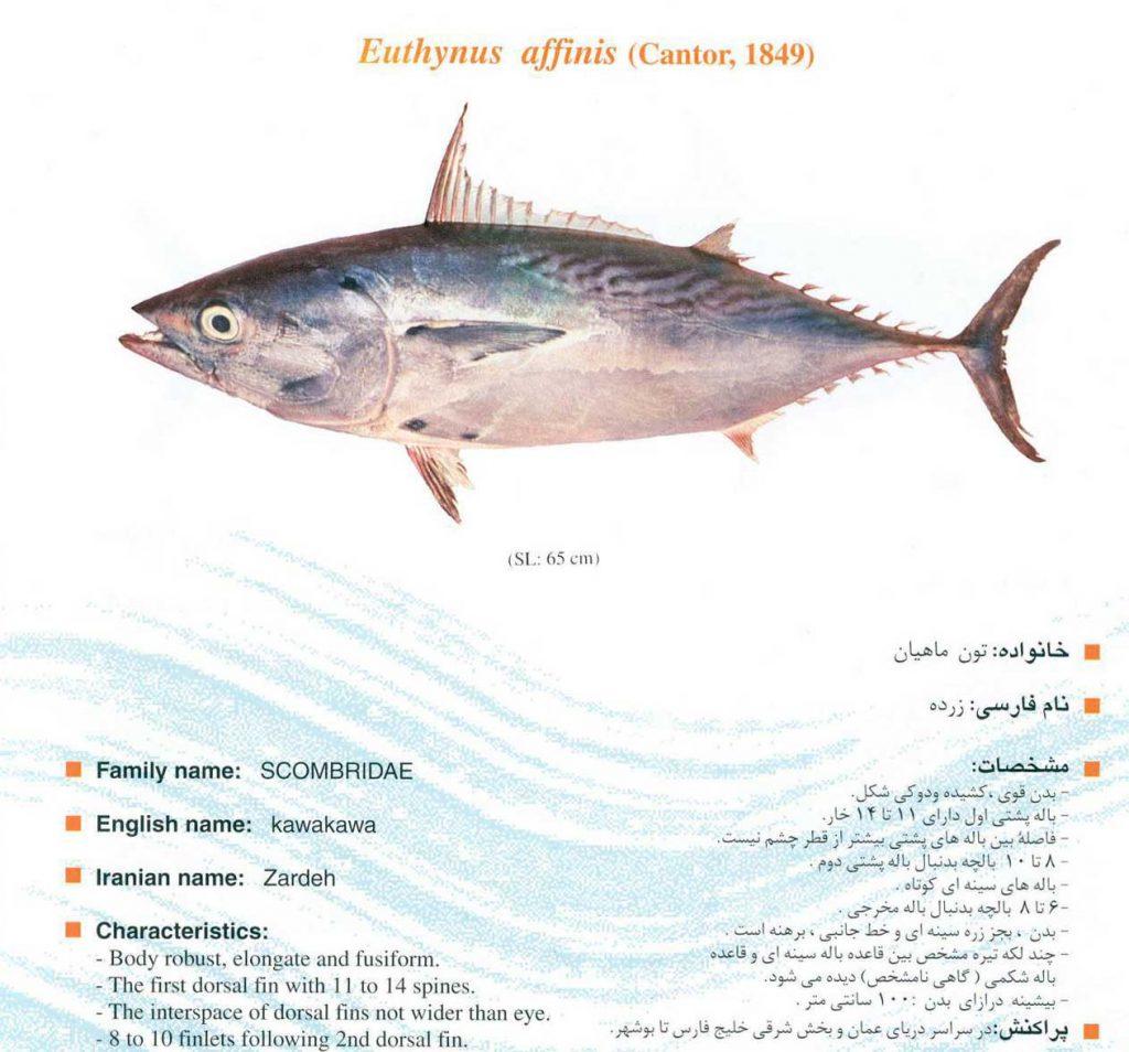 ماهی زرده