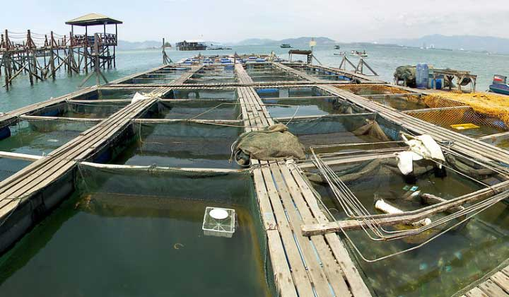 آبزی پروری در مالزی