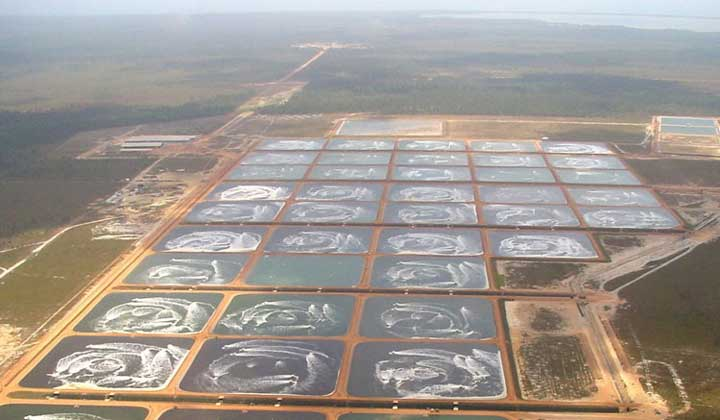 shrimp-farming01