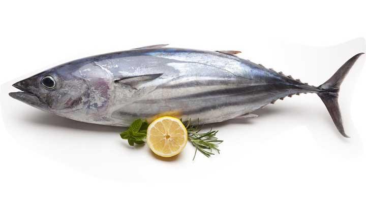 افزایش قیمت جهانی ماهی تون /گزارش فائو سپتامبر 2016
