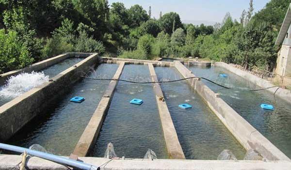 تولید و تجارت آبزیان در استان مازندران