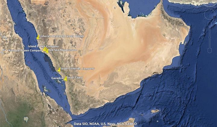 مروری بر وضعیت آبزی پروری صنعت میگوی عربستان