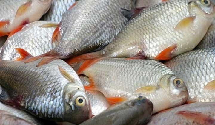 رونق صادرات آبزیان ایرانی به آمریکا و استرالیا/ صادرات انواع ماهی دوباره جان گرفت