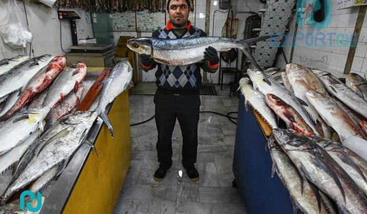 تعارضات صیادان سنتی مجاز با صید صنعتی/ عدم پایش موثر بر شناورهای مشغول به صید در دریا
