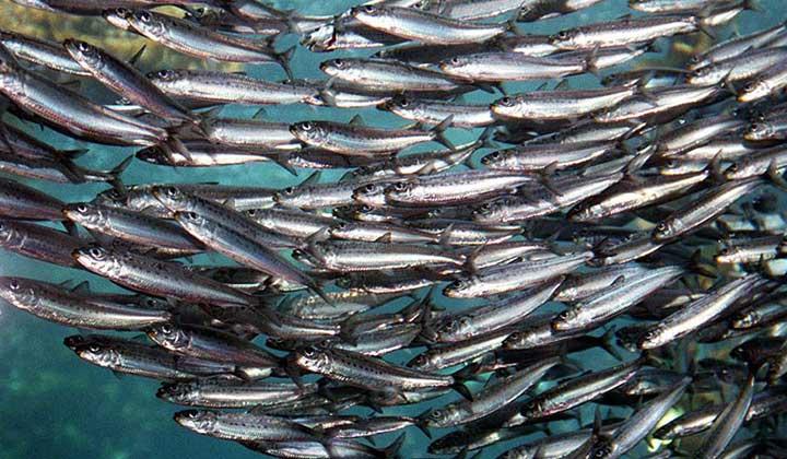 اطلاع رسانی و حمایت اتحادیه از برگزاری برنامه اجرایی رویداد استارت آپی  ماهی ساردین و متوتا